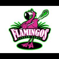 Finger Lakes Flamingos